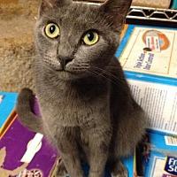 Adopt A Pet :: Tali - Sunset, LA