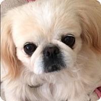 Adopt A Pet :: Taffy-Ann - Simi Valley, CA