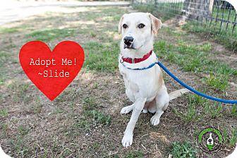 Labrador Retriever Mix Dog for adoption in Calgary, Alberta - Slide