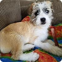 Adopt A Pet :: Mona Lisa - Meridian, ID