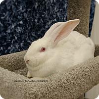 Adopt A Pet :: Yeta - Marlton, NJ