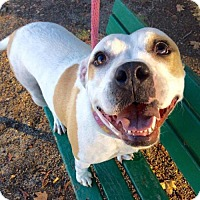 Adopt A Pet :: Sheera - Corning, CA
