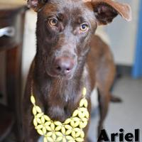 Adopt A Pet :: Ariel - Lonely Heart - Gulfport, MS