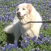 Adopt A Pet :: Junior - Spring, TX