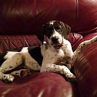 Adopt A Pet :: Josi - Ashburn, VA