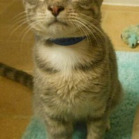Adopt A Pet :: Dallas - Reston, VA