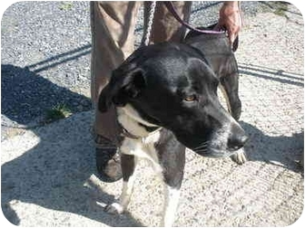 Hound (Unknown Type) Mix Dog for adoption in Broadway, New Jersey - Ethel