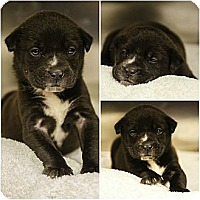 Adopt A Pet :: Grumpy Puppy - Cumming, GA