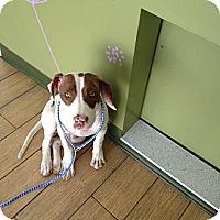 Adopt A Pet :: Sadie - Los Angeles, CA