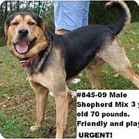 Adopt A Pet :: # 845-09 ADOPTED! - Zanesville, OH