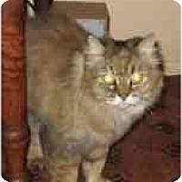 Adopt A Pet :: Shotsy - Fort Lauderdale, FL
