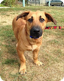 Dachshund Mix Dog for adoption in New Milford, Connecticut - Ricotta