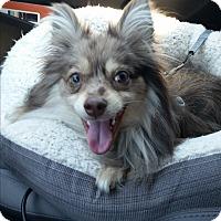 Adopt A Pet :: Nato - conroe, TX