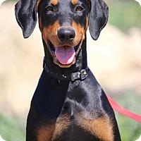 Adopt A Pet :: Lilly - Fillmore, CA