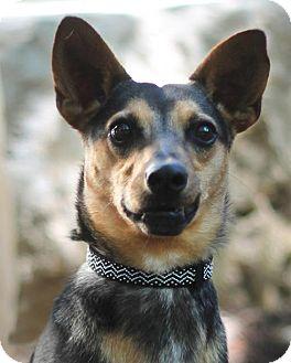 Terrier (Unknown Type, Medium) Mix Dog for adoption in San Antonio, Texas - Daniel