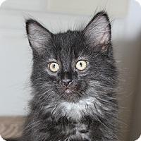 Adopt A Pet :: Maurice - Fairfax, VA