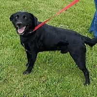Adopt A Pet :: Roosevelt - Cameron, MO
