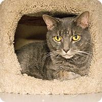 Adopt A Pet :: Rocco - New York, NY