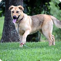 Adopt A Pet :: JENNY - richmond, VA