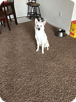 Husky Mix Dog for adoption in Spring Lake, North Carolina - Tala