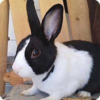 Adopt A Pet :: Puca - Los Angeles, CA
