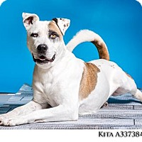 Adopt A Pet :: KITA - Reno, NV