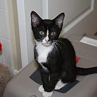 Adopt A Pet :: Faith - Tampa, FL