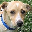 Adopt A Pet :: Vic