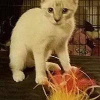 Adopt A Pet :: *JYNX - Sacramento, CA