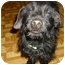 Photo 3 - Dachshund Dog for adoption in Lawndale, North Carolina - Waldo