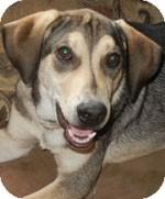German Shepherd Dog/Hound (Unknown Type) Mix Puppy for adoption in St. Louis, Missouri - Jake