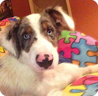 Basset Hound Mix Dog for adoption in Homewood, Alabama - Patches