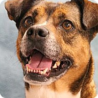 Adopt A Pet :: Sue - Hagerstown, MD