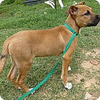 Adopt A Pet :: Ruby - Katy, TX
