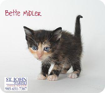Domestic Shorthair Kitten for adoption in Laplace, Louisiana - Bette Midler