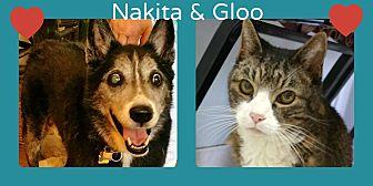Husky/Australian Cattle Dog Mix Dog for adoption in Phoenix, Arizona - Nakita