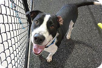 Mixed Breed (Large) Mix Dog for adoption in Meridian, Idaho - Jax