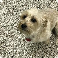 Adopt A Pet :: Max - Cedar Rapids, IA