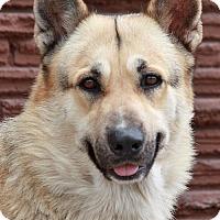 Adopt A Pet :: Kovu von Lollar - Los Angeles, CA