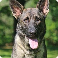 Adopt A Pet :: Kimmie - Nashville, TN