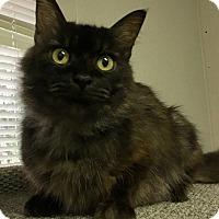 Adopt A Pet :: Bobbie - Savannah, GA