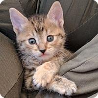 Adopt A Pet :: Stardust - Tucson, AZ
