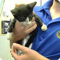 Adopt A Pet :: A619368 - Louisville, KY