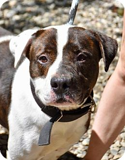 Hound (Unknown Type) Mix Dog for adoption in Danbury, Connecticut - Zeus