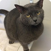 Adopt A Pet :: Greyson         m - Fremont, OH