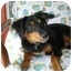 Photo 1 - Gordon Setter Mix Dog for adoption in Folsom, Louisiana - Ernie