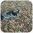 Photo 3 - Australian Cattle Dog Dog for adoption in Mt Vernon, Missouri - Billie