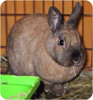 Other/Unknown Mix for adoption in Maple Ridge, British Columbia - Sparkles - VIDEOS