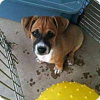 Adopt A Pet :: Jase - Phoenix, AZ