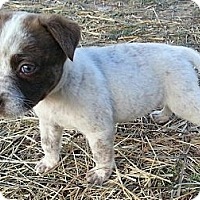 Adopt A Pet :: Sheppy - Linton, IN